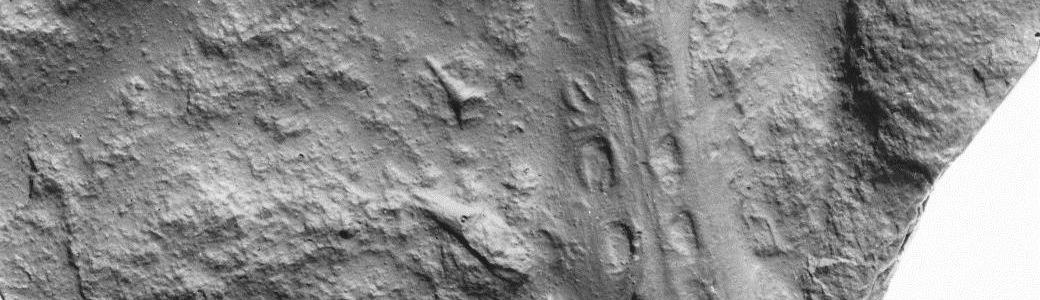 Vorschaubild: Geologisch-Paläontologische Sammlungen