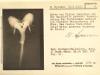Wilhelm-Roux-Sammlung für Entwicklungsmechanik