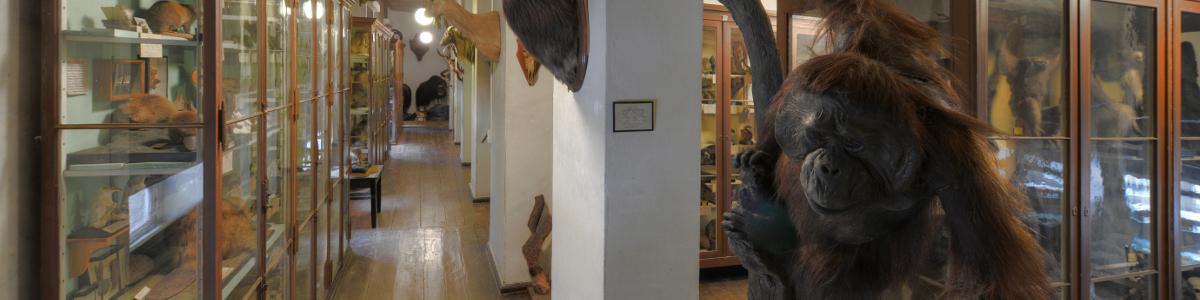 Vorschaubild: Zoologische Sammlung