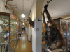 Zoologische Sammlung